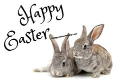Wish Your Loving One A Very Happy and Peaceful Easter Sunday 2020 😍 :) 💜❤️💜❤️💜❤️ 😍 :) Easter Bunny Colouring, Easter Egg Coloring Pages, Happy Easter Quotes, Happy Easter Bunny, Wish Quotes, Funny Quotes, Passover Images, Easter Drawings, Blessed Quotes