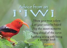 """Sip the sweet moments."" Advice from an I'iwi. Your True Nature"