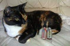 http://ecigarettereviewed.com/wp-content/uploads/2014/01/cat-vaping-pg-e-liquid.jpg