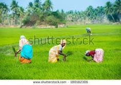 Image result for kids art rural cotton fields