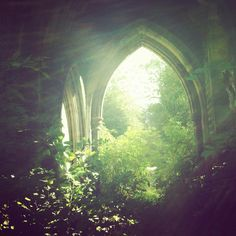 derelict cemetery church arches getting reclaimed by green nature