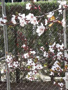 Prunus Mume, Plants, Art, Plant, Planets