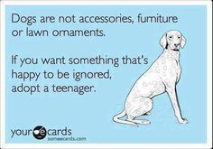 """""""dogs (or husbands) are not accessories, furniture or lawn ornaments.  if you want something that's happy to be ignored, adopt a teenager"""""""