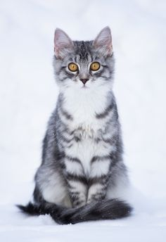 Rockfall, tom, funny, quick, and clever. No mate or kits. Sister is Flowerstripe. ~me~