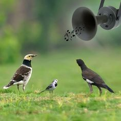 Do you love to hunt birds?! If so, now, I strongly introduce a fantastic hunting #BirdCaller to you! This amazing tool will help you focus your aiming birds' attention when you  play the birds voices that you've already download. Buy it and witness it!http://www.tomtop.cc/umq2uq