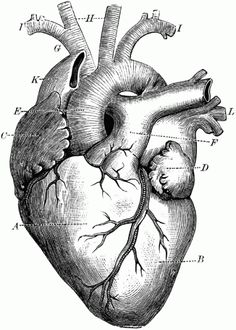 love-heart-e1317834183269.gif 411×575 pixels