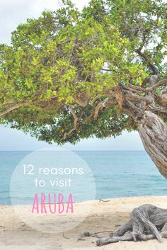Have you ever wondered about travelling to Aruba? Here are 12 reasons why you should visit this island!