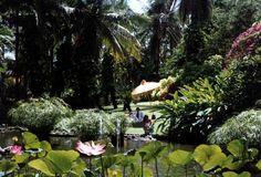 Melia Balinese Garden, Garden Styles, Gardens, Plants, Outdoor Gardens, Garden, Flora, Plant, Yards