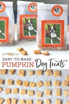 DIY Pumpkin Dog Treats {Easy 3-Ingredient Recipe} Puppy Treats, Diy Dog Treats, Healthy Dog Treats, Canned Pumpkin For Dogs, Pumpkin Dog Treats Homemade, Pumpkin Recipes For Dogs, Homemade Dog Cookies, Homemade Dog Food, Labrador Retriever