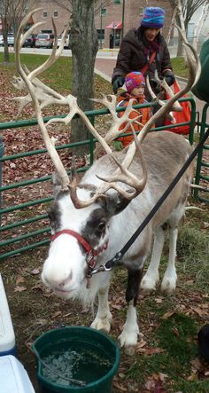 Nov. 24, 2012. Two days after Thanksgiving and signs of Christmas are popping up everywhere. This reindeer made a stop at the holiday farmer's market in downtown Bloomington to the delight of kids of all ages. Can the jolly man in the red suit be far behind? Photo by Mark Land.