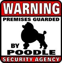Warning, poodles. poodles