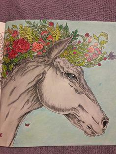 #imagimorphia#horse