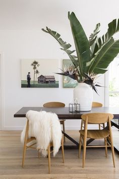 Large scale plants as the best decor elements