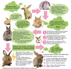 trendy pet bunny care tips house rabbit Buy A Bunny, Adopt A Bunny, Cute Bunny, Bunny Care Tips, Rabbit Information, House Rabbit Society, Indoor Rabbit, Raising Rabbits, Rabbit Hutches