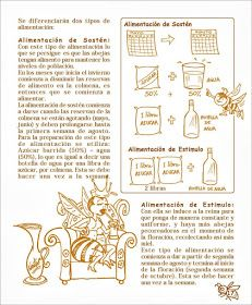 La Familia de la Apicultura - The Beekeeping of Family: Manual Apícola Ilustrado - Beekeeping Illustrated Manual. Drone Bee, Bee Supplies, Raising Bees, Bee Farm, Beekeeping, Queen Bees, Bullet Journal, Illustration, Golden Honey