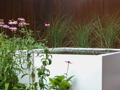 Water Features, Pond, Fountain, Aquarium, Waterfall, Bbq, Planters, Water Sources, Goldfish Bowl