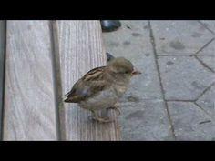 Birds fluffing - YouTube