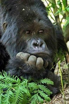 Thinking about how to get humans to let us be, leave us our habitat and food, don't destroy all of us.