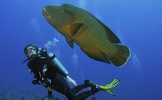 Maldives. Ten great dive sites   Photo Gallery   Rough Guides