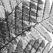 felce_arborea my new pattern on sale on @Spoonflower