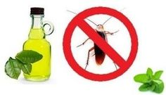 Aggressive Natural Cockroach Repellents / pin now, read later > list of simple & easy to do solutions to keep roaches out of your home. I'm definitely going to try these...