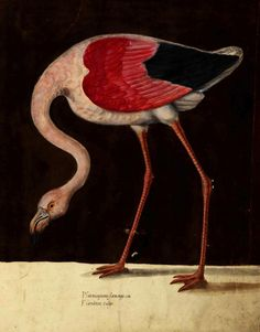 Flamingo Art, Pink Flamingos, 11. September, Bird Perch, Flocking, Bird Feathers, Natural History, Rooster, Birds