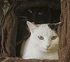 Hiding in a Hidden Hollow Cat Tree