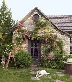"""A gorgeous Tudor home, covered in a mix of 'Veilchenblau' and 'New Dawn' climbing roses."""