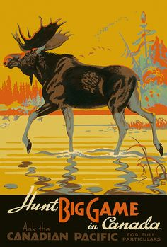 Premium Giclee Print: Visit Canada - Bull Moose - Canadian Pacific Railway by Thomas (Tom) Hall : Moose Hunting, Bull Moose, Moose Art, Canadian Pacific Railway, Canadian Travel, Kunst Poster, Poster S, Poster Maker, Canada Day