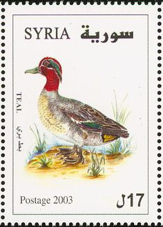 Eurasian Teal stamps - mainly images - gallery format