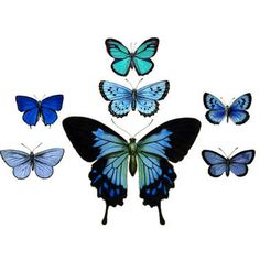 mini butterfly tattoo - Google Search