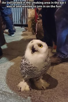 Disoriented Owl at a Bar. Owls be crazy!