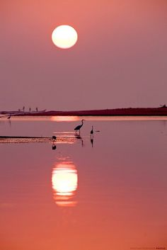 Pink Beach Moon <---- (I think that's the sun? Beautiful World, Beautiful Places, Beautiful Pictures, All Nature, Amazing Nature, Foto Poster, Pink Beach, Pink Sunset, Pink Lake