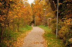 Elljusspår October 2013, Country Roads, Website, Facebook, Twitter, Google, Photos, Pictures, Cake Smash Pictures