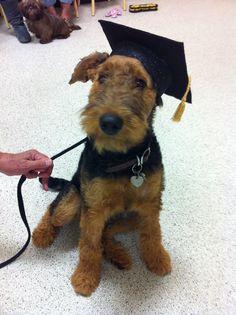 Dog Graduation Hat Costume by petdogtrainer on Etsy, $10.00