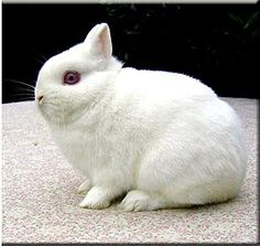 For Bunny Foo Foo by drdovey1966 on Pinterest   Rabbit Cages, Rabbit ...