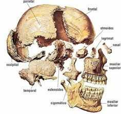 Krk.. huesos craneales
