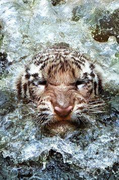 tiger coming to the surface by leonardi ranggana