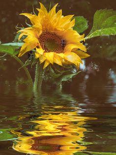 'Für die Küche - Sonnenblumenöl' von Chris Berger bei artflakes.com als Poster oder Kunstdruck $15.33