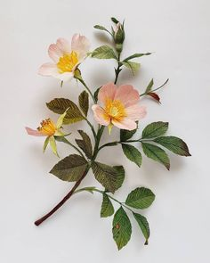 """Rosa in the wild. See you other """"wild types"""" tomorrow Rosa in the wild. See you other wild types tomorrow Crepe Paper Flowers, Diy Flowers, Fabric Flowers, Flower Crafts, Beautiful Flowers, Quilling Flowers, Paper Roses, Ikebana, Botanical Illustration"""