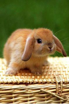 fuzzy bunny, sweet