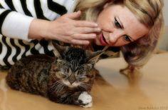 Layla Morgan Wilde, holistic cat behaviorist, celebrity cat consultant, pet industry influencer founder of www.catwisdom101.com