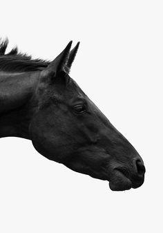 Black | Horse