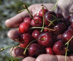Kirsikoita, cherries