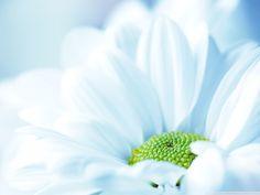 Flower.....