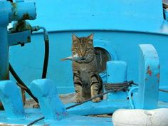 Cat in Greece carrying a fish