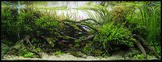Hanasaka Jiisan by Ulrich POUPIN from FRANCE Aquarium size: 120 x 50 x 60 cm