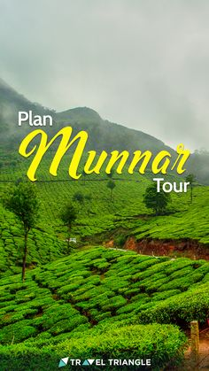 267 Munnar Tour Packages - Avail amazing deals on best-selling Munnar tour packages offered by trusted agents on TravelTriangle and view the best of South India on your trip to Munnar. Munnar, South India, India Travel, Holiday Travel, Travel Destinations, Holiday Packages, Packaging, Tours, How To Plan