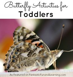 Butterfly Activities for Toddlers...crafts, songs, science, and story activities perfect for little learners!