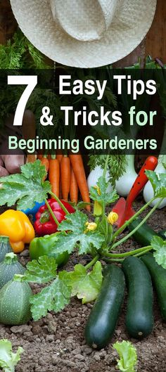 Vegetable Gardening For Beginners 7 Tips and Tricks for Beginning Gardeners. Most garden-know-how is hard won by experience and lots of research. But if youre just starting, these garden tips can help you grow a bountiful crop. Vegetable Garden For Beginners, Home Vegetable Garden, Gardening For Beginners, Diy Garden, Garden Landscaping, Garden Tools, Garden Ideas, Landscaping Ideas, Organic Vegetables